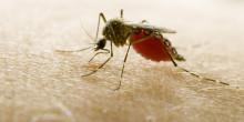 Ny Discovery-dokumentar går tæt på global myggeepidemi