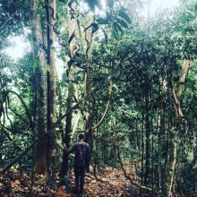 New tool highly effective at estimating the condition of tropical forests