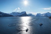Moderat verdivekst for sjømateksporten i mai