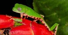 124 nye arter fundet i Bolivia