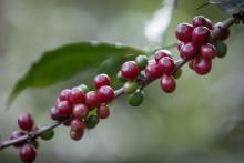 Debatt: Fairtrade nu viktigare än någonsin