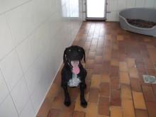Ausgesetzt: 9 Monate alter Jagdhund