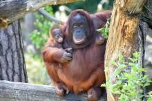 Sommerferienprogramm im Zoo Rostock