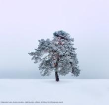 Ищем лучшего фотографа России по версии Sony World Photography Awards