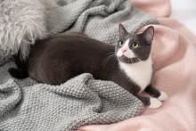 Op med poten! Her er den ultimative guide til at gøre dit kæledyr kendt på Instagram