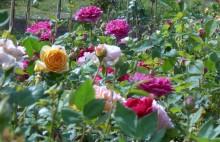 """Zu Besuch bei der """"Königin der Blumen"""""""
