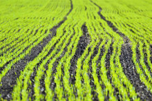 Ny SVU-rapport: Avloppsslam på åkermark – vad behöver vi veta om oönskade organiska ämnen? (Avlopp & miljö)