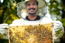 Syrští uprchlíci pomáhají v Evropě zachraňovat včely