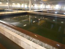 Ny SVU-rapport: Underhållsplanering för betongkonstruktioner i vattenverk