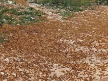 Värsta gräshoppssvärmen på 25 år - Rädda Barnen larmar om situationen på Afrikas horn