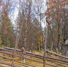 Beslut om nytt naturreservat: Stormorvallen