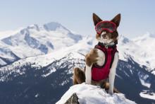 Hundarna kommer till Cosmonova! Premiär för Superpower Dogs