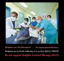 """Tierschützer warnen vor Delfintherapie - """"Abzocke"""" von Anbietern"""