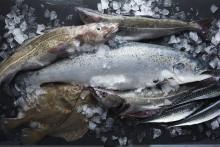 100 procent hållbart fångad fisk
