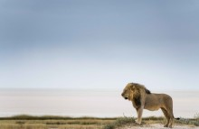 Leben und Überleben in der Wildnis