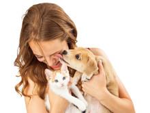 Hund, Katze, Mensch - Mit Betaisodona Bisswunden desinfizieren