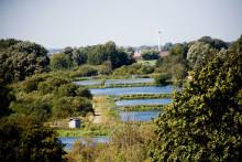 Fiske för dammar i ekologisk balans