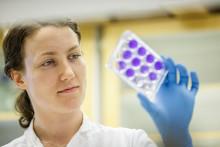Immuntest för coronavirus framtaget av forskare i Västerbotten