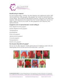 Klassificering av tulpaner.