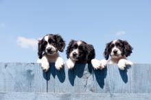 Hundeboom in Deutschland: Tierversicherungen mit Rekordzahlen