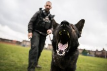 Police Dog Chico helps arrest man after Walton burglary
