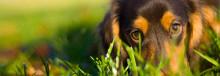 Nu är fästingsäsongen igång för fullt! Skydda ditt djur!