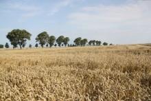 Mejetærskerne er kørt på markerne