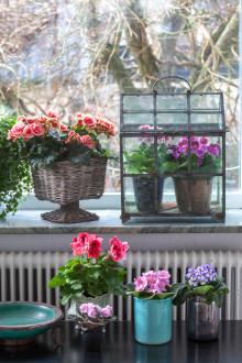 Vår på fönsterbrädan