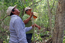 Rainforest Alliance utsedd till Världsbankens partner i hållbart jordbruksprojekt