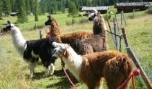 Mit der Familie in die Berge – Tipps für den Urlaub im Vinschgau