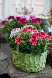 Blomsterfrämjandet ställer ut på Nolia Trädgård & Antik 27 – 29 april