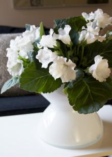 Månadens blomma – januari 2010
