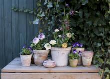 Vårplanteringar av Ida Magntorn