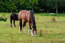 Hästgårdar kan göra goda insatser för miljön