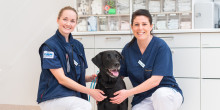 Helt ny veterinärklinik på Lidingö för Evidensia