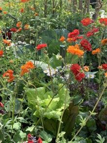 Odlingsinspiration från Chelsea Flower Show