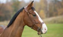 Sveland Djurförsäkringar utökar sitt samarbete med FirstVet