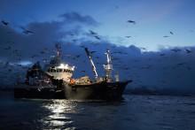 Marine mammals fieldwork amongst fishermen