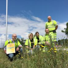 Årets Pollinatör 2017: Trafikverket på Gotland