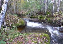 Tranås Energi får tillstånd för faunapassage