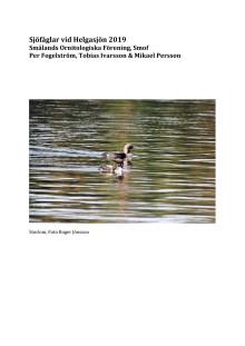 Sjöfåglar vid Helgasjön 2019