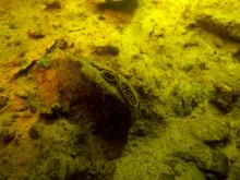 Tusentals musslor får nytt hem