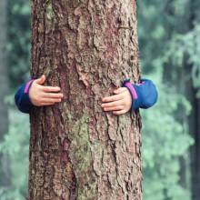 Wer zahlt… wenn der Wald brennt?