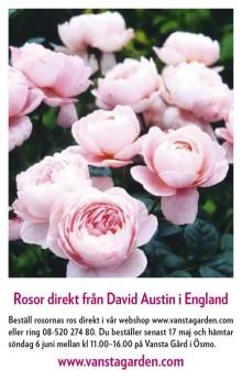 Beställ rosor direkt från David Austin i England