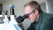 Stamcellsforskning i samverkan utvecklar säkrare läkemedel