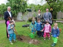Noch trägt der kleine Apfelbaum die ersten zarten Blüten...