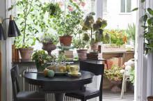 Forskning visar: Växter får dig att må bättre