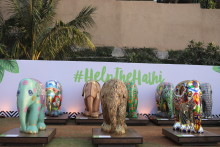The city of Mumbai comes together for a final hurrah to the herd