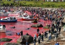 Tierschutz-Demo vor TUI Cruises-Zentrale wegen Walmassaker auf Färöer-Inseln