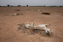 THIRD DROUGHT IN SIX YEARS LEAVES 245,000 PEOPLE WITHOUT FOOD IN SENEGAL